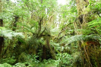 1280px Oparara Basin Native forest 3