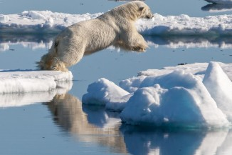 Polar bear Ursus maritimus in the drift ice region north of Svalbard 3